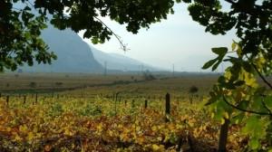 Viñedos en los campos de Italia