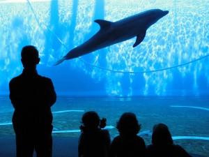 Aquariums de Italia