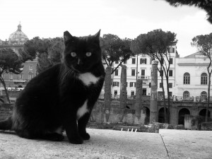 Gatos de Roma