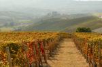 Bodas y Matrimonio en Le Langhe Monferrato. Una de las mejores zonas para casarse en Italia